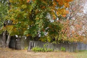 ... зато листья красивые!
