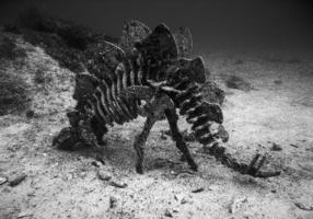 Крокозябля подводная, редкоземельная.