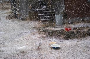 Апрельский снегопад