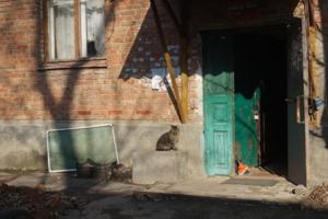 Кошка и дверь