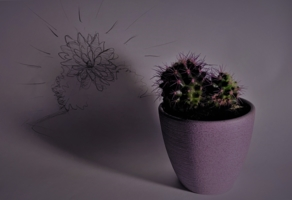 большая мечта маленького кактуса