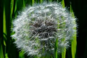 в ожидании ветра