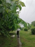 ... когда льёт дождь