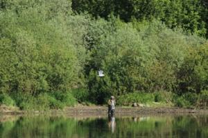 Чайка и рыбак
