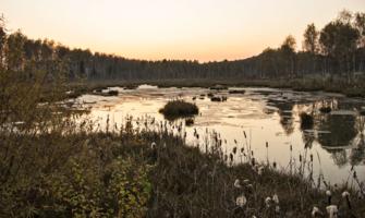 Вечернее болото
