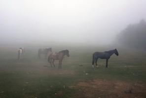Туман - время уныния