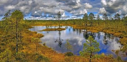 """Национальный парк Эстонии """"Болота Виру"""""""
