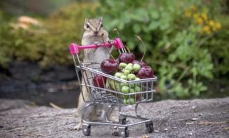Везёт из супермаркета