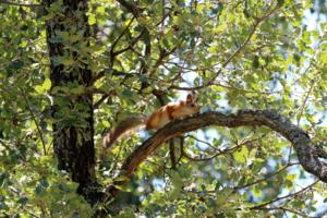 Где-то высоко на дереве