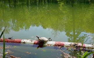 Гимнастика для черепахи