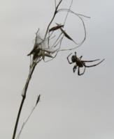 Хокку о пауке