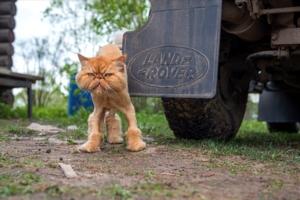 Противоугонные коты
