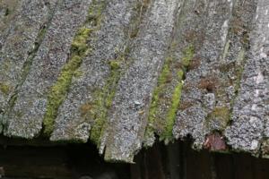 дремучая крыша
