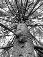 Дерево, посаженное тобой...