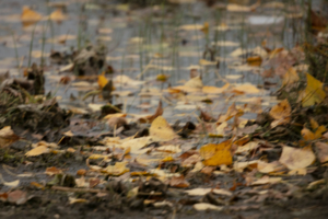 ветер разнос листву по берегу