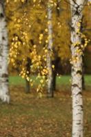 Осень, осень…