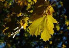 Солнечный лист