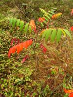 Осеннее разноцветие