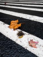 Переход в осень