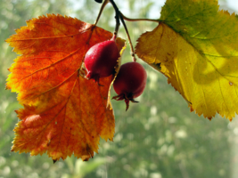 Осень неизбежна