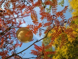 Осеннее кружево