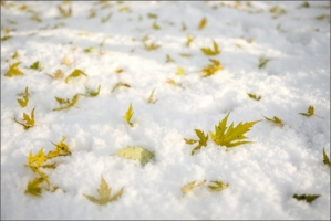 Яблоки на снегу II