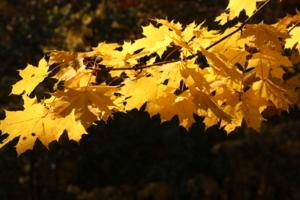 золото осени