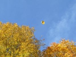 Осенний лист по ветру кружит...
