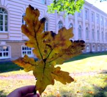 осень Петергофа
