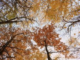 Глянул вверх, а там уже Осень !