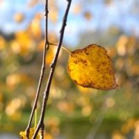 Жёлтый лист осенний