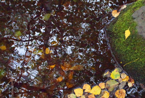 Мокрый лист осенний
