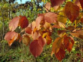Красный лист осений