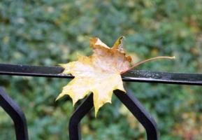 Грусть осени
