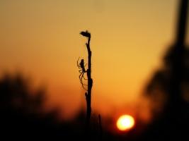 Спускаясь вслед за солнцем