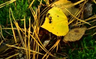 Свидание на осеннем листе