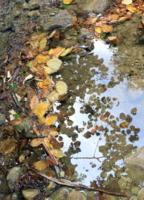 Мини дамба из листьев в ручье