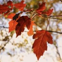 Грустная осень