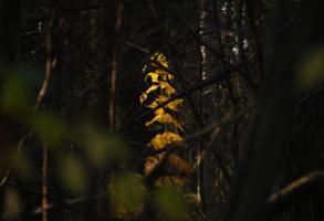 Осенняя свеча.