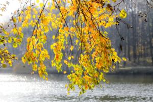 Загорелые листья