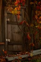 Последняя осень.
