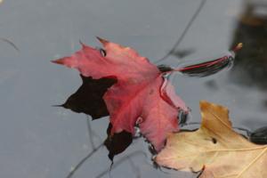 в стылую воду падают листья