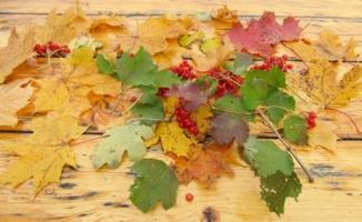 Осенние зарисовки...
