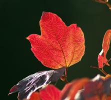 Багрянец октября