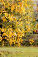 Пастельная осень
