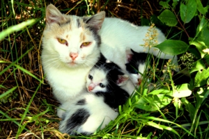 Мать с детьми.
