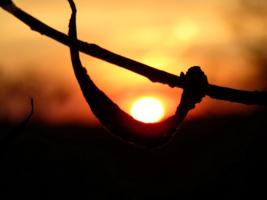 Солнце в колыбели