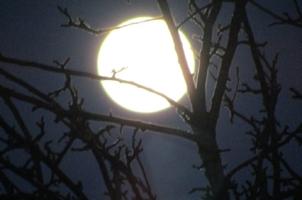 Окольцованная Луна...