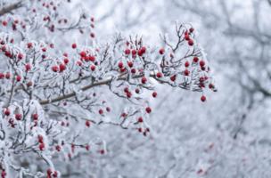 Краски января