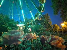 Вечерний парк в городе роз.